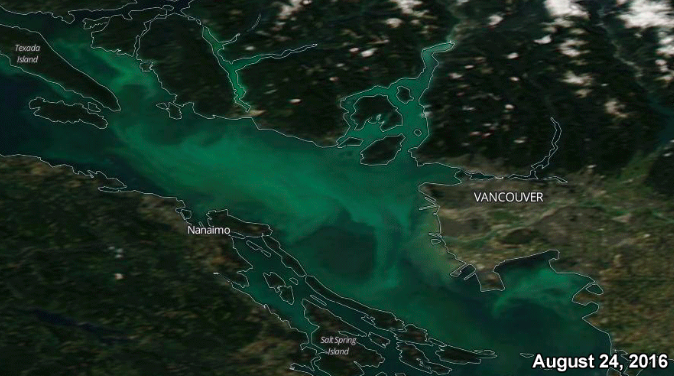 Algal Bloom as seen from space