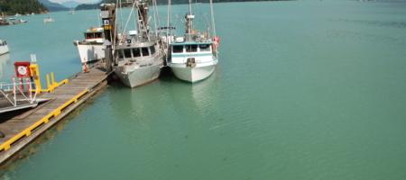 Unprecedented Green Ocean: Feeling Homesick at Home